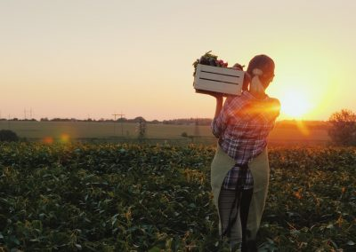 Gympie Region Brand Story - image local produce box
