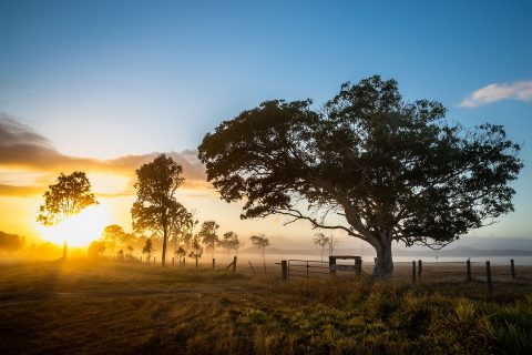 Gympie Region Brand Story - image sunrise on farm