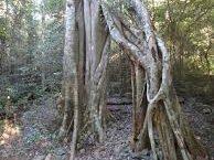 Mudlo National Park
